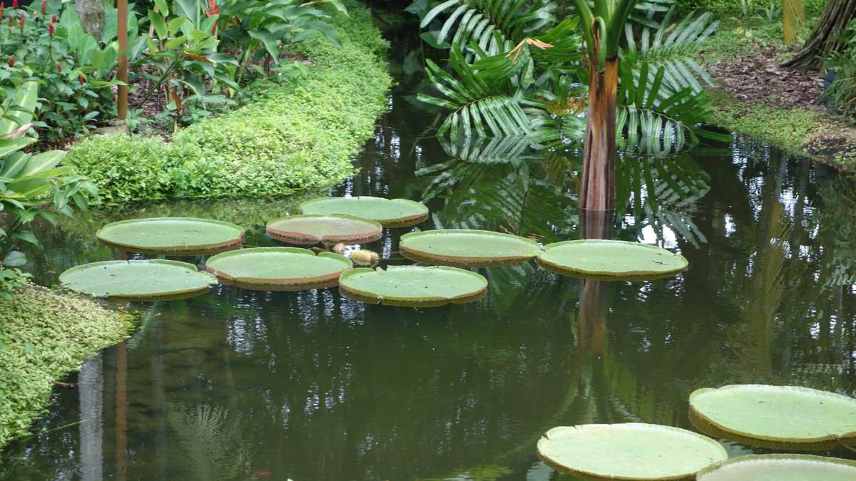 Magischer See in Singapur Zoo